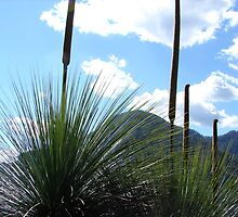 Mt Warning through the Grass Trees by Lisa Martin