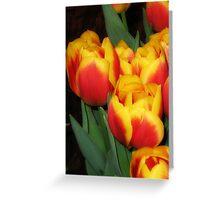 Blazing Beauty Greeting Card
