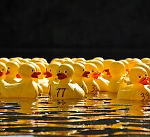 The Duck Race by Jeff Notti
