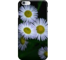 White Fleabane Wildflowers iPhone Case/Skin