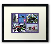 Pipevine Swallowtail Life Cycle Framed Print