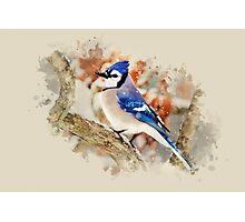 Bluejay Watercolor Art Photographic Print