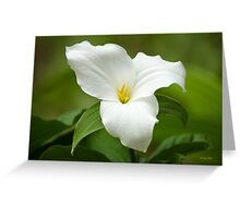 White Trillium Wildflower Greeting Card