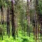 Rainforest Lines by Kitsmumma