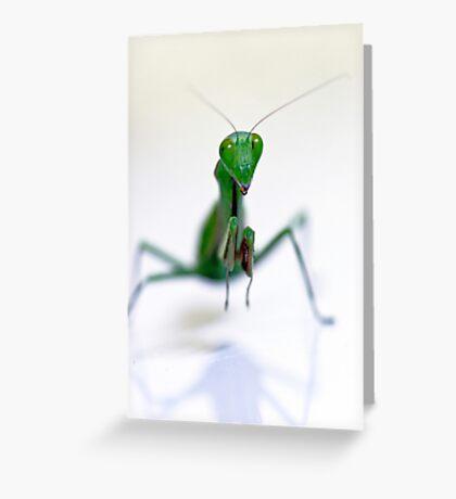 Praying Mantis  Greeting Card