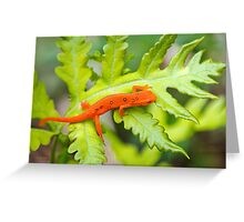 Red Eft Eastern Newt Greeting Card