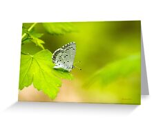 Spring Azure Butterfly Greeting Card