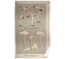 Illustrations of British Fungi by Mordecai Cubitt Cook 1891 V1 0587 AGARiCUS  CLITOCYBE  TORNATUS Poster