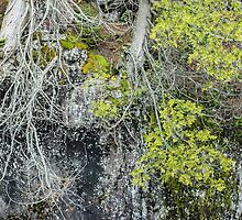 Growth Along the Gorge by April Koehler