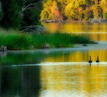 Lake Mikarny, Forest, NW Tasmania by Garth Smith