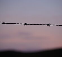 wire at dawn by Jan Stead JEMproductions