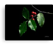 Christmas Holly Canvas Print