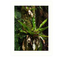 Green adornments - Bangalow Palm trunk Art Print
