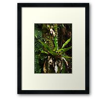 Green adornments - Bangalow Palm trunk Framed Print
