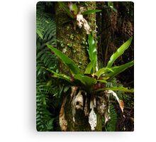 Green adornments - Bangalow Palm trunk Canvas Print
