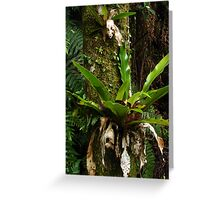 Green adornments - Bangalow Palm trunk Greeting Card