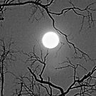 It was a dark and spooky night...... by Lynda Kerr