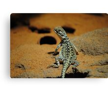 Look at Moiee Canvas Print