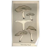 Illustrations of British Fungi by Mordecai Cubitt Cook 1891 V1 0563 AGARiCUS  CLITOCYBE  ODORUS Poster