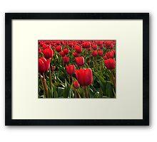 A field full Red Tulips Framed Print
