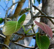 Bodhi leaf by boodacious