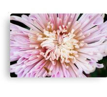 Chrysanthemum Abstract Art Canvas Print