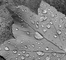 Rain Droplets by Fay Freshwater