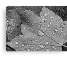 Rain Droplets Canvas Print