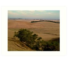 Barrabool Hills Farmlands Art Print