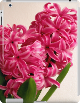 Pink Pearl Hyacinth by Fay Freshwater