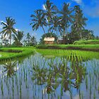 Reflections in the rice paddy by Adri  Padmos