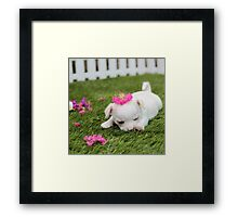 Chihuahua Puppy with Pink Bow Framed Print