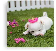 Chihuahua Puppy with Pink Bow Canvas Print