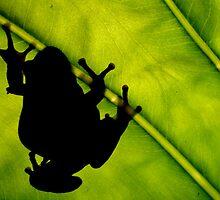 Frog Silhouette by John Marriott