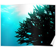 Silhouetted Coral Poster