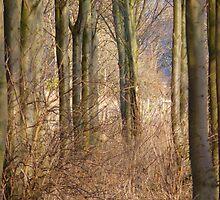 The Fairy Woods down Gypsy Lane!! by artfulvistas