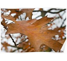 Autumnal Leaves. Poster
