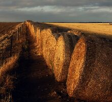 Roles of the Hay by Paula McManus