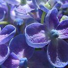 Bubble Blue Hydrangea by Gabrielle  Lees