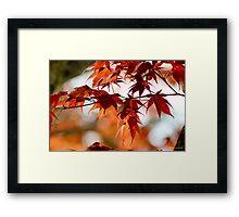 Spring Maple Orange Framed Print
