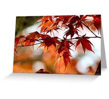 Spring Maple Orange Greeting Card