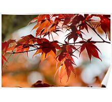Spring Maple Orange Poster
