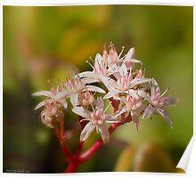 a floral bokeh Poster