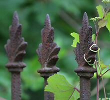Vines Entwine by Gilda Axelrod