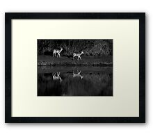 Morning Beauties Framed Print
