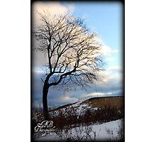 Solitary Tree-Quabbin Reservoir Photographic Print