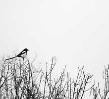 One for Sorrow by aesthetic221