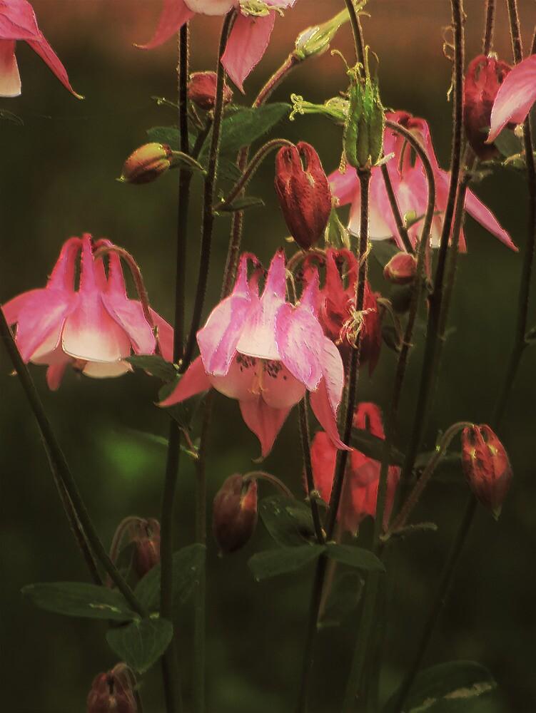 Sweet Columbine by Pamela Phelps