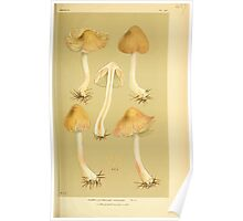 Illustrations of British Fungi by Mordecai Cubitt Cook 1891 V3 0549 AGARICUS  INOCYBE  HIULCUS Poster