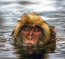 Snow Monkey in Hot Springs by blueskyy